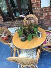 FREE conservatory chairs and table