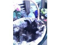 cute cuddly kittens