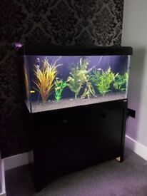 FLUVAL ROMA 200 L FISHTANK IN BLACK WITH MATCHING CABINET IN GOOD CONDITION