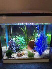 Shrimp Fish Tank Full Setup