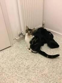 Five months old kitten