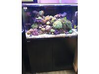 White/black Red Sea reefer 250 marine tropical fish tank aquarium (delivery /installation)