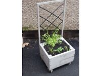 *HALF PRICE* Last chance Grey&Black planter with trellis and flowers