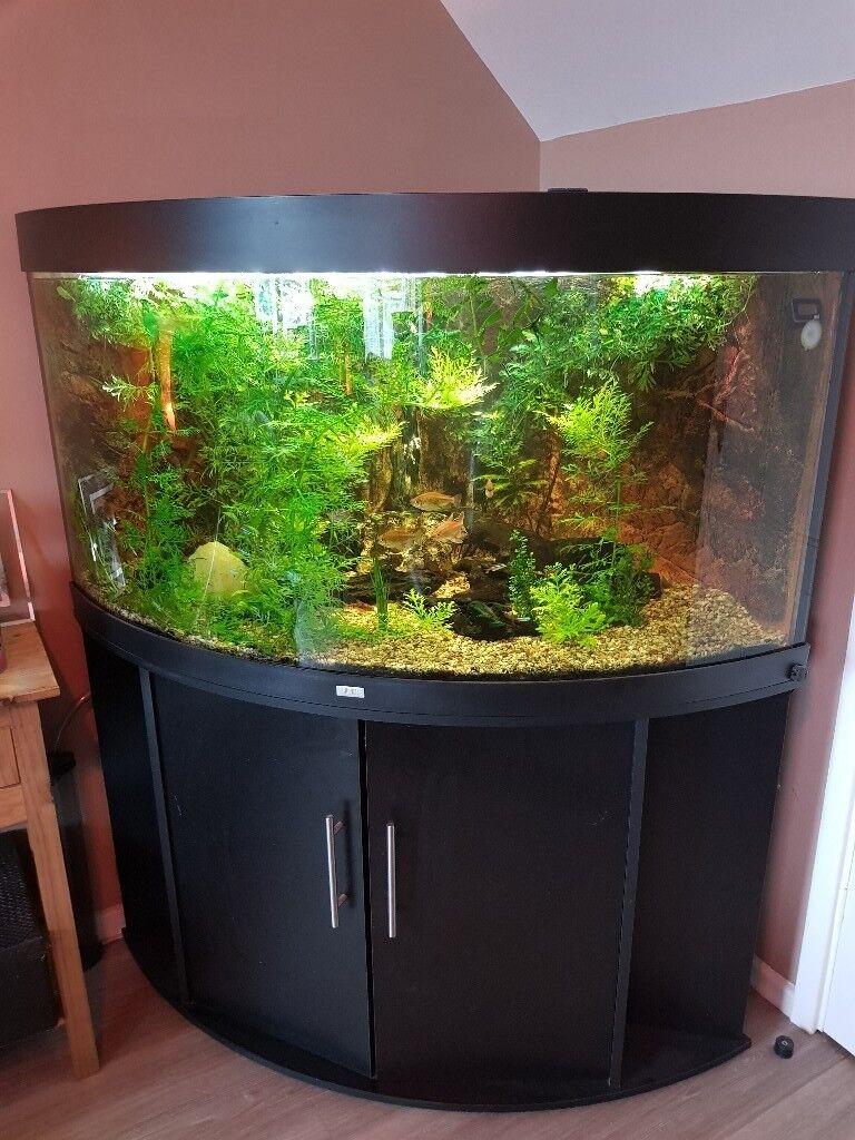 Juwel Trigon 350l Tank Stand Decorations Fish