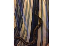 Snake & tank