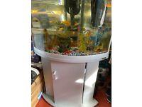 Aqua one corner aquarium