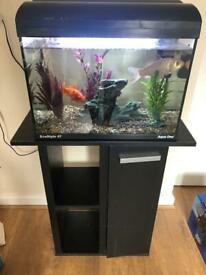 Fish tank with 2 goldfish