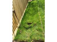 FREE Lawn Turf (3.5 ft x 22ft) newly laid Nov 17