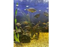 MALAWI CICHLIDS DIFFERENT SIZES HOLEY NATURAL Ocean ROCK