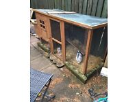 two rabbits with full set up and giant home for sale