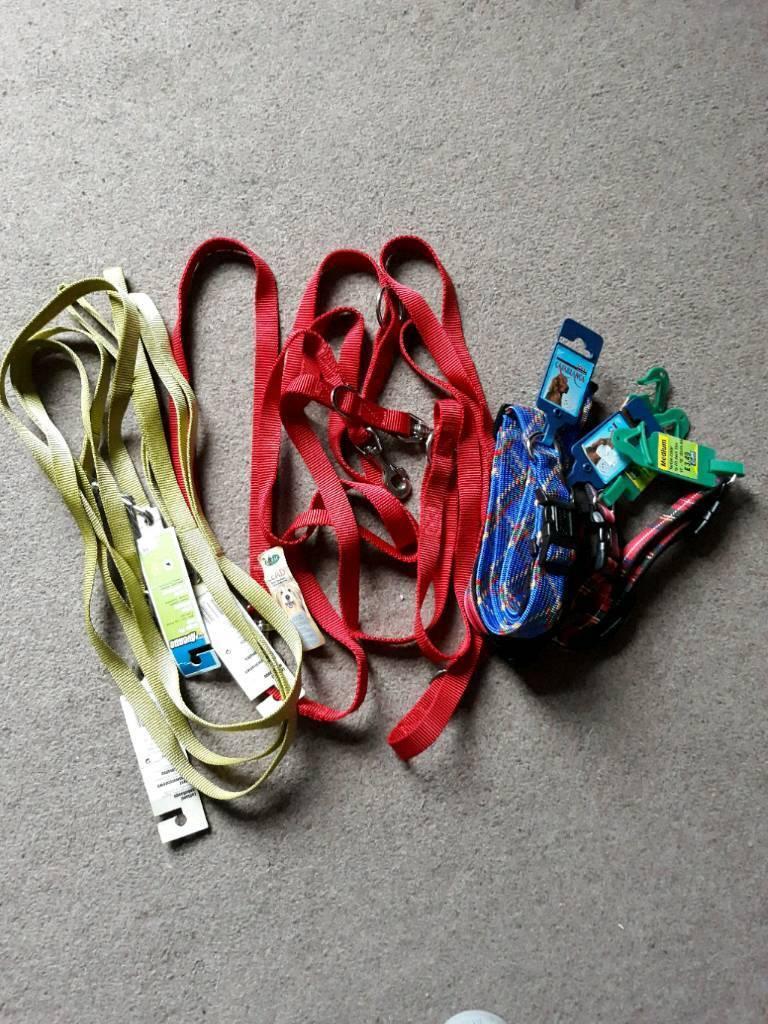 Bundle of medium dog collars and leads