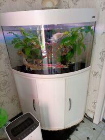 Aqua One vogue Corner Aquarium with cabinet white 140l tropical fish tank rgb
