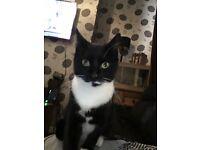 Felmale black and white cat