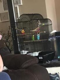 Budgies and very nice cage.