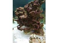 Marine live reef rock artificial flat plate reef plating table