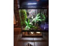 dalmantion gecko