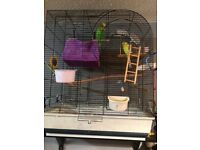 Budgies male female plus cage