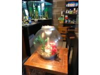 30l bi orb fish tank v g c full set up with light pump filter lid gravel ornament all work look pic