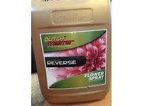 Dutch master gold range reverse flower spray