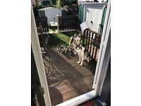 Three beautiful Siberian husky puppies.