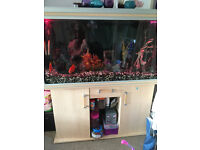 Fish Tank & Cabinet, external filter, pump and LED lights