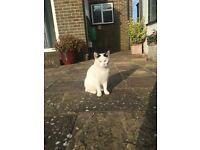 Beautiful male cat