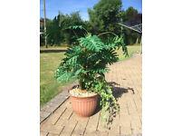 Artifitial Plant