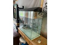 Aquarium tropical fish tank. Vivarium