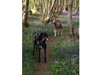 Dog walk Dog sitter Worthing