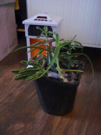 Succulent House Plants in a plastic Pot Selection of 4 plants