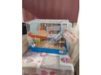 2 female dwarf roborovski hamsters with accessories