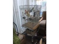 Birdcage with 2 budgies and 6 zebra finches