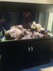 Black Aqua one 400 marine tropical fish tank aquarium with setup
