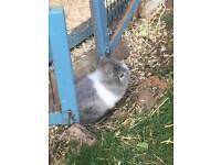 Beautiful friendly rabbit