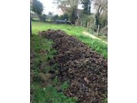 Free horse manure for your allotment no straw all sawdust help yourself