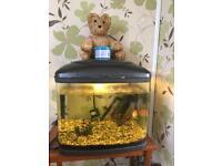Medium sized fish tank