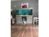 5x2x2 ND Aquatics fish tank