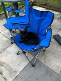 Black Male Cat - Needs a loving forever home