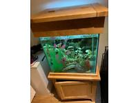 Solid oak fish tank 160 Litre