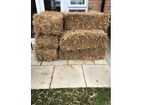 8 hay bales for sale - £3 each