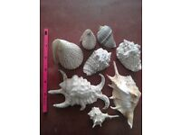 Collection of decorative shells