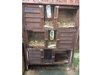 Triple hutch and 2 rabbits