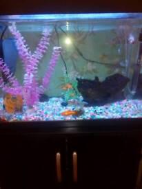 Fish tank plus fish