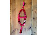 Doodle bone dog harness XS in red