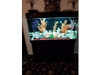 6ft Fishtank with full set up and a few fish £600 ono