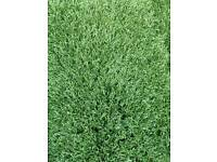 Artificial Grass 9msq Bargain! 2mx4.5m. Got more if you require.