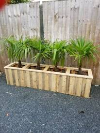 Indoor planter with four palms for office or conservatory