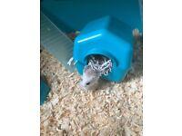 Cute little hamster