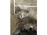 2 kittens for sale, 1 girl 1 boy,