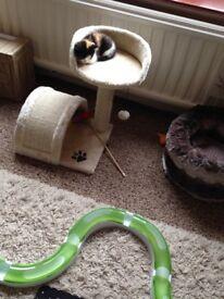 Kitten activity centre